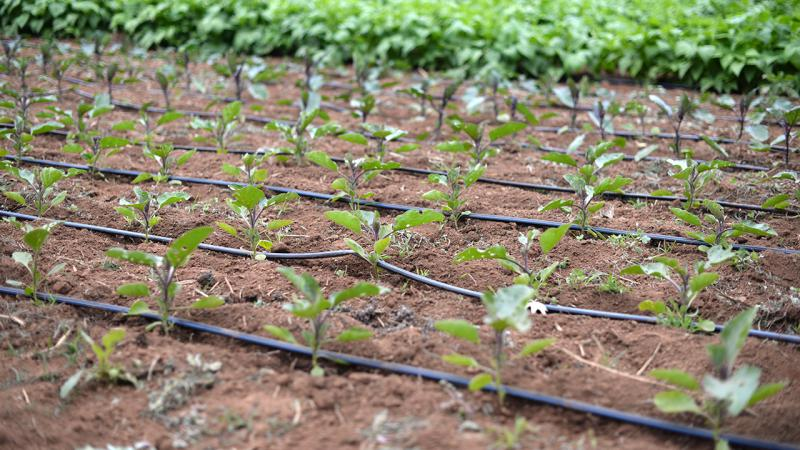 How Irrigation Controllers Market improves agriculture
