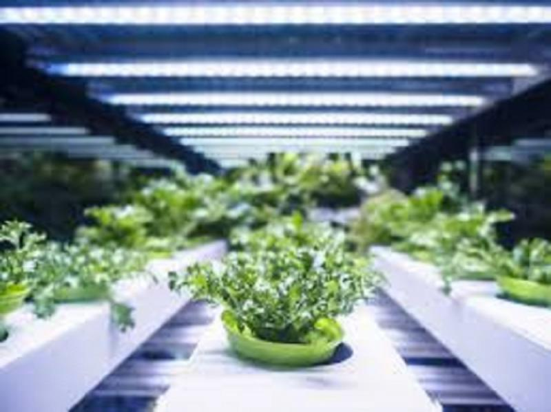 Indoor Farming Technology