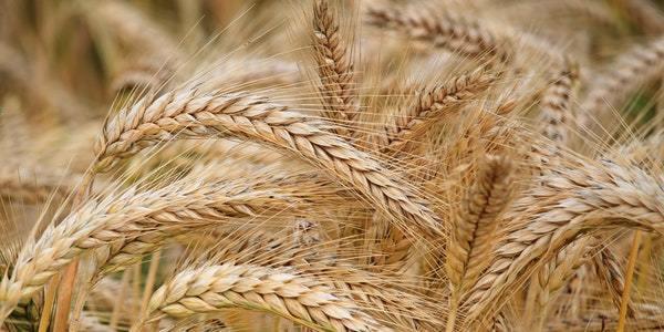 Hydrolyzed Wheat Protein Market 2019   Global Forecast 2025   Top
