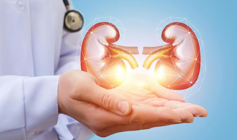 Implantable Bioartificial Kidney Market