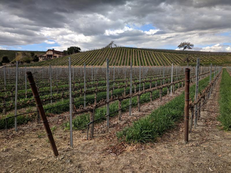 Beautiful Santa Ynez Vineyard in the winter.