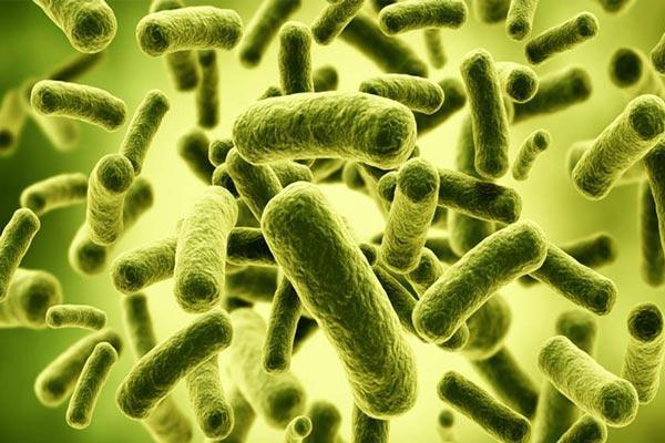 Bacillus Coagulans Market