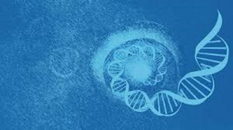 Single-Cell Genome Sequencing Market