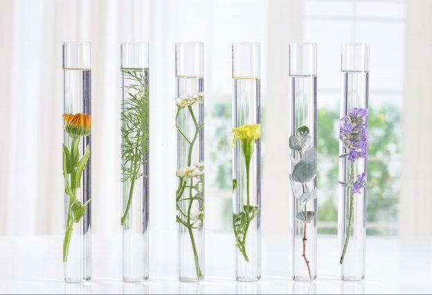 Global Botanical Extracts Market