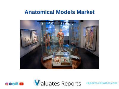 Global Anatomical Models Market valued at 50 million US$ in 2018