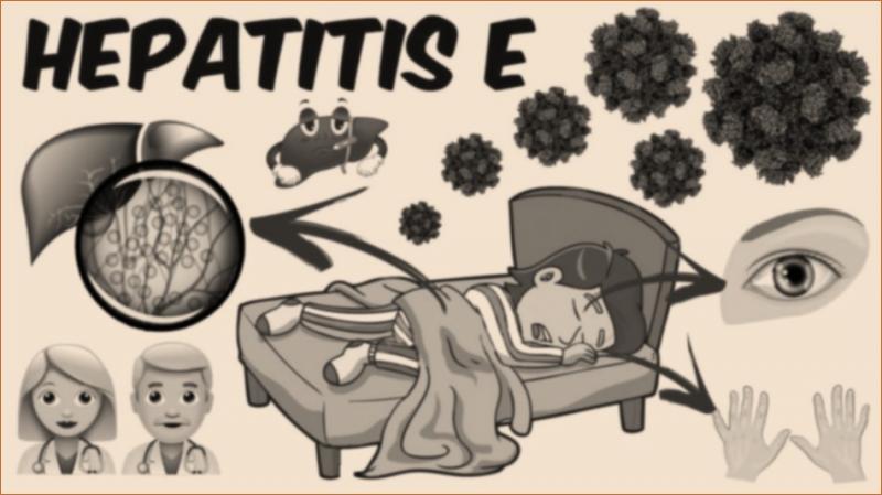 Hepatitis E Therapeutics Pharma Proff