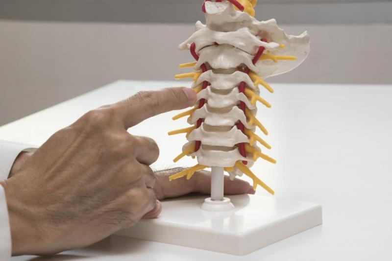Global Spinal Implant Market Forecasting CAGR 6.0% Growth