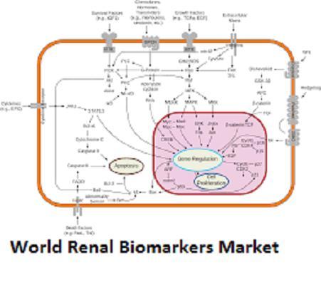 Renal Biomarkers Market