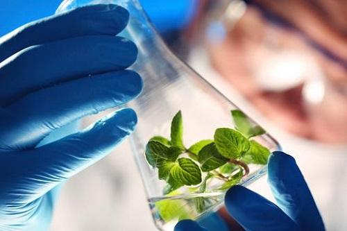 Global Renewable Chemicals Market