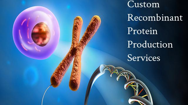 Custom Recombinant Protein Production Services Market Future
