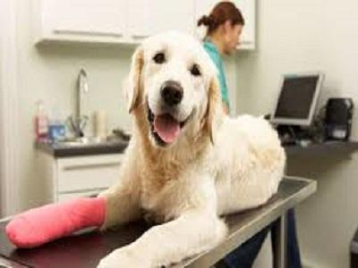 ANIMAL WOUND CARE Industry Report,  ANIMAL WOUND CARE Market Forecast,  ANIMAL WOUND CARE Market Growth,  ANIMAL WOUND CARE Market