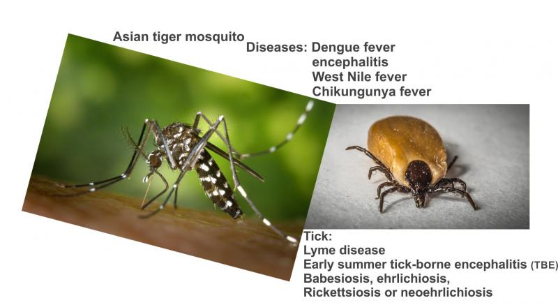 Health Threats Mosquito and Tick
