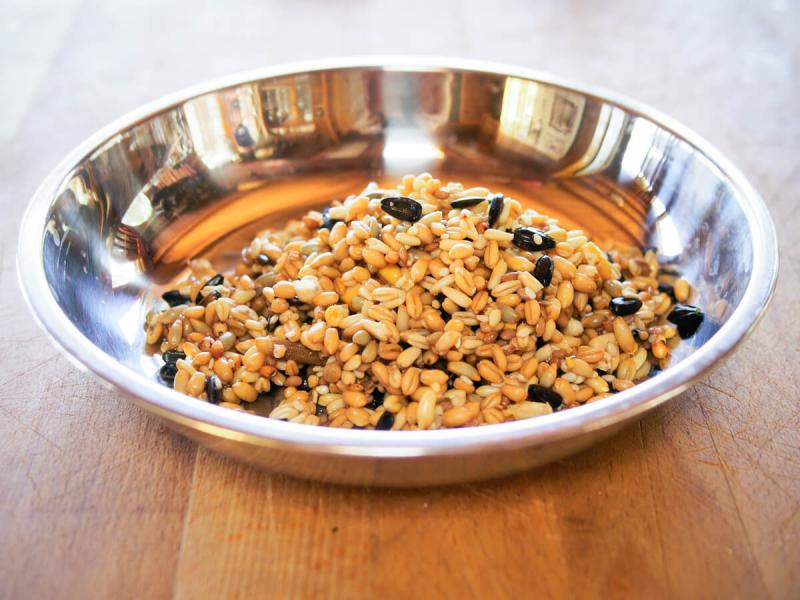 Image result for Fermented Feed Ingredient