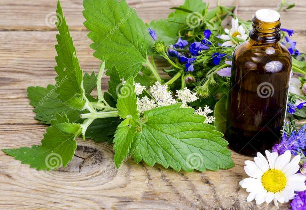 Pharmaceutical and Medicinal Herbal Extracts Market Size,