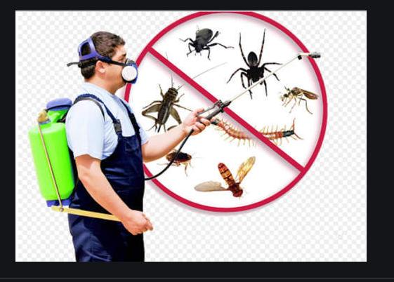 Bug Control Services Market Size, Share, Development by 2024