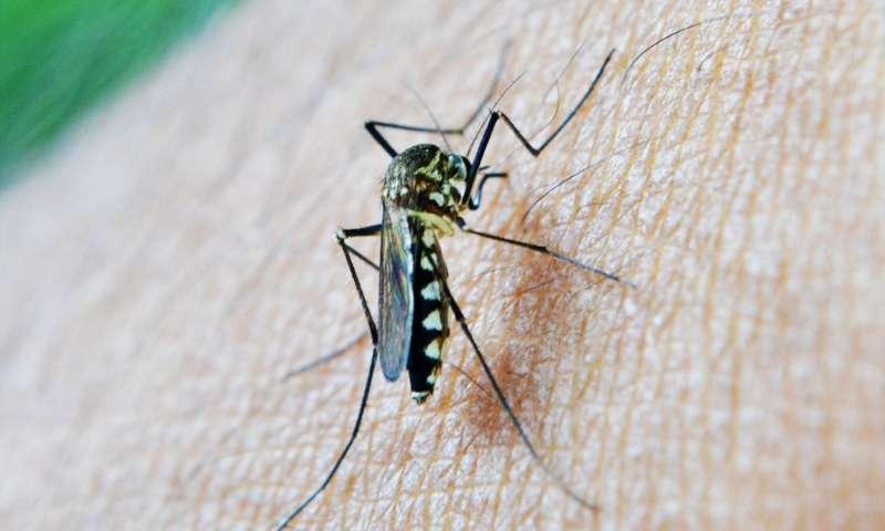 Malaria Vaccines Market