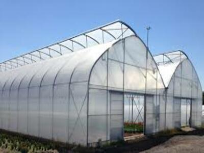 GREENHOUSE FILMS MARKET SIZE GROWTH OPPORTUNITIES,FORECAST