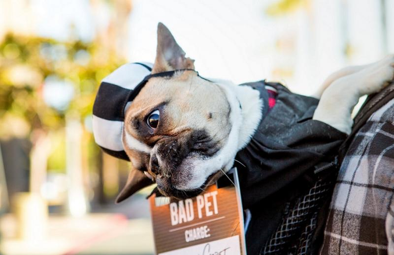 FREE, FAMILY-FRIENDLY PET PARADE & HOWL-O-WEEN COSTUME CONTEST