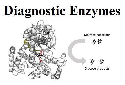 Diagnostic Enzymes Market