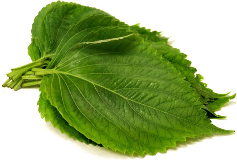 Perilla Leaves Extract Market to Witness Robust Expansion