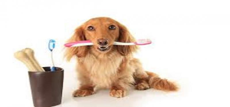 Pet Dental Care Products Market