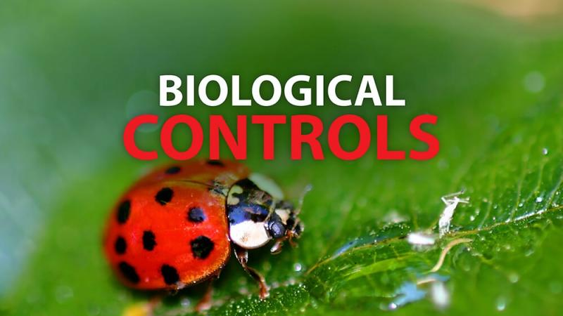 Global Biological Control Market to Witness a Pronounce Growth