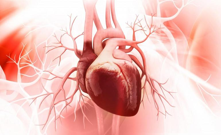 Hypertrophic Cardiomyopathy (HCM) Therapeutics Market