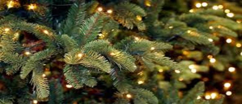 Christmas Trees Market