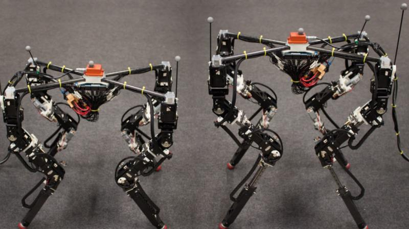 Mammal-type Quadruped Robot Market Size, Share, Development