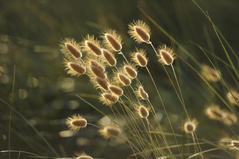 GMO Crops Market Release involving BASF SE, Monsanto Co, Takii
