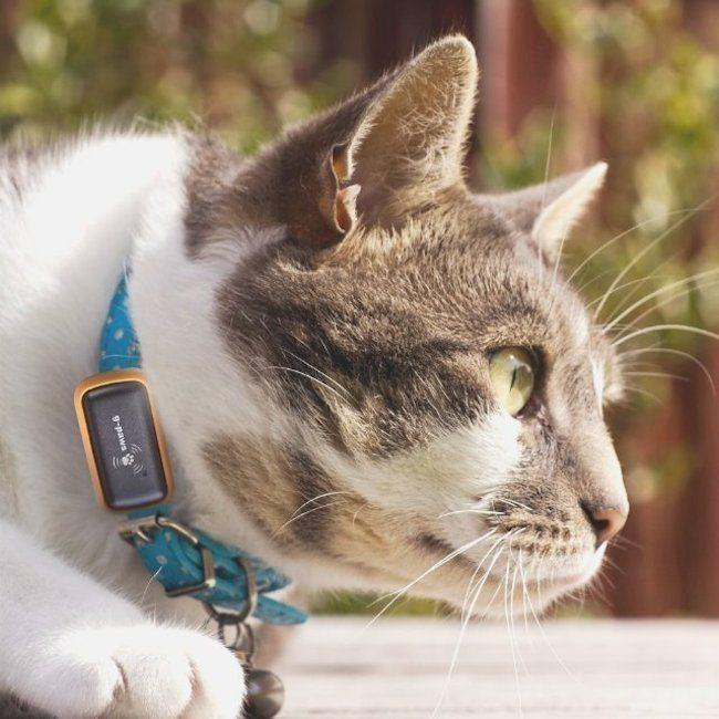 Global Pet GPS Trackers Market Expected to Witness a Sustainable