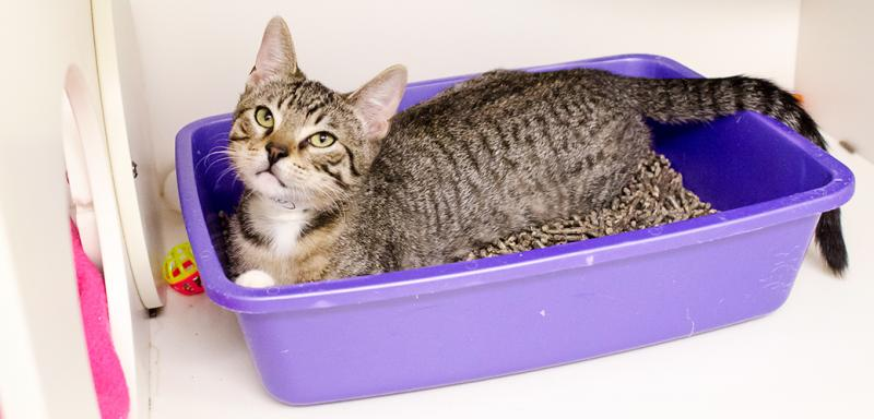 Global Cat Litter Trays Market Expected to Witness a Sustainable