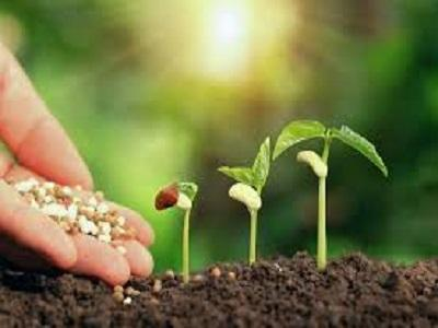 Organic Fertilizers Market