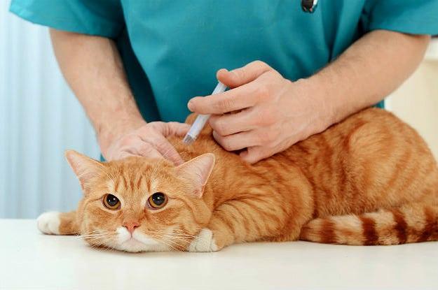 Marché des vaccins pour animaux
