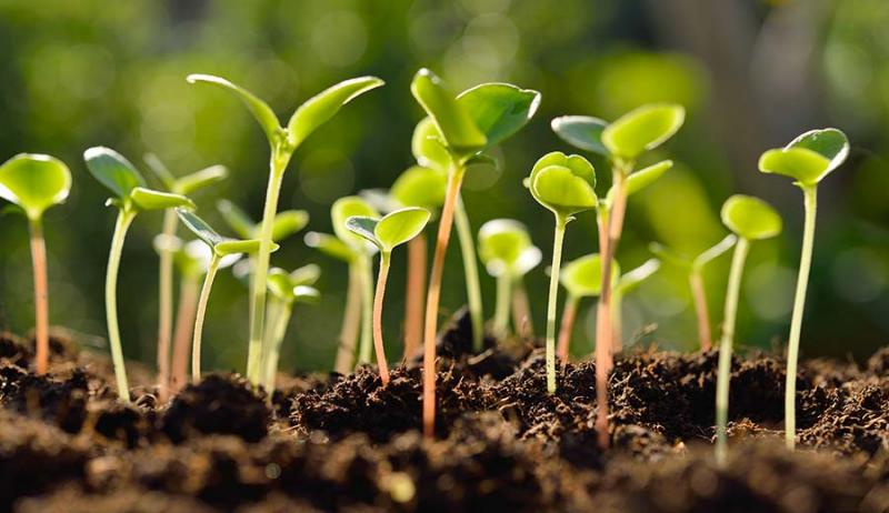 Insecticide seed treatment Market is witnessing exponential