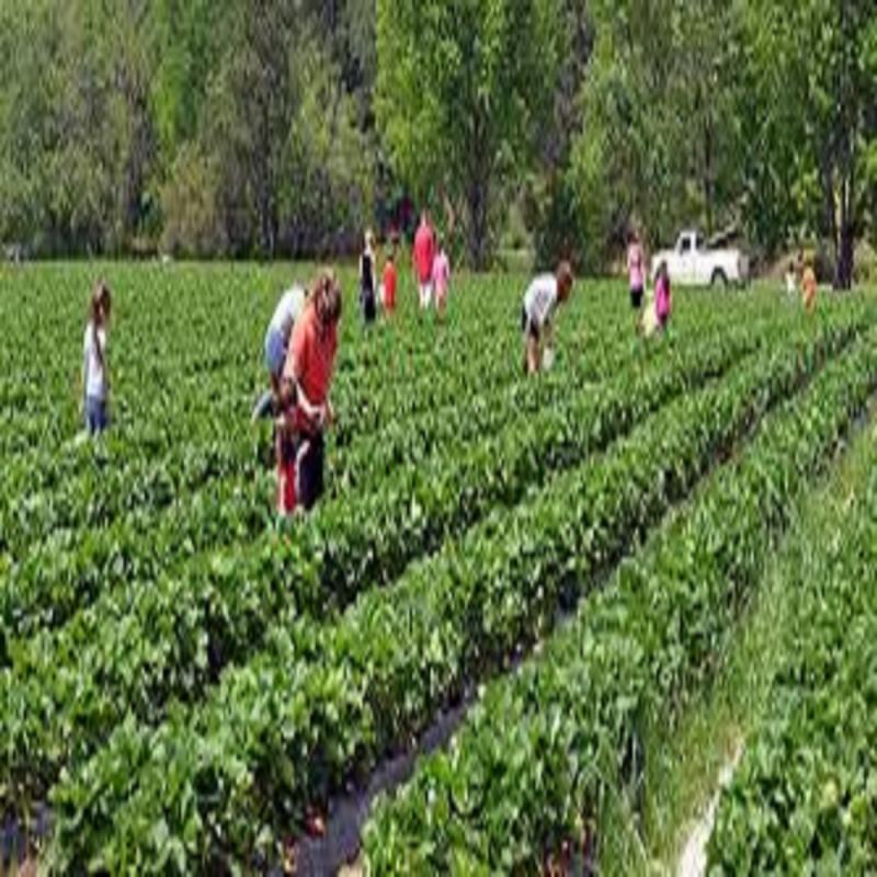 Agritourism Market - Adroit Market Research