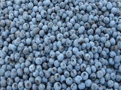 IQF Blueberry Market