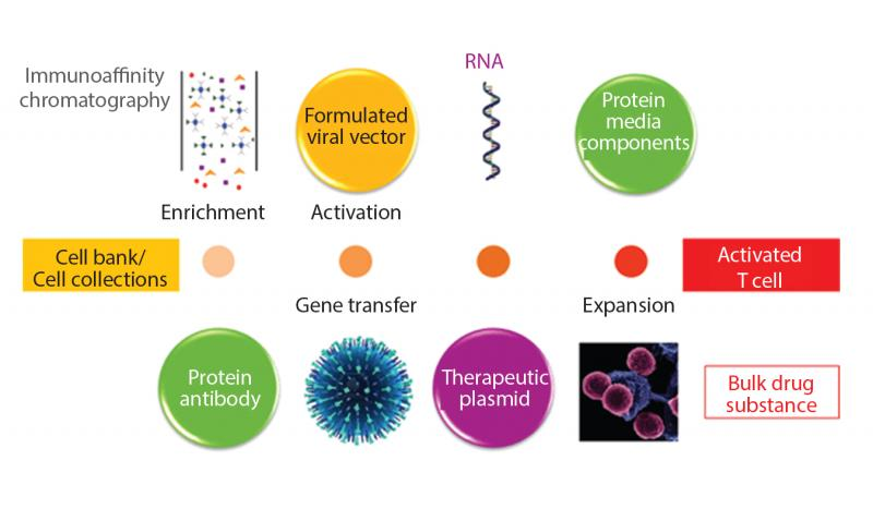 Astonishing growth in Cell and Gene Therapy Consumables Market
