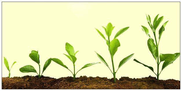 Global Plant Growth Regulators Market