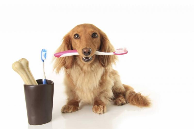 Industrie des produits de soins bucco-dentaires pour animaux