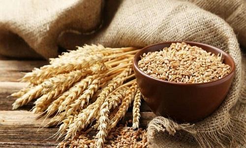 Global Wheat Protein (Wheat Gluten) Market 2020 – Industry Growth ...