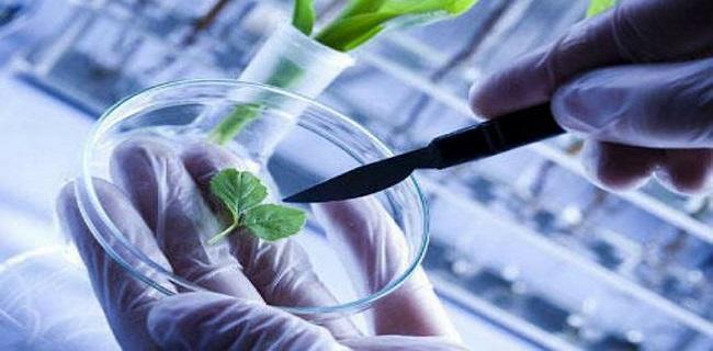 Biotechnology Market Top Growing Companies Analysis during