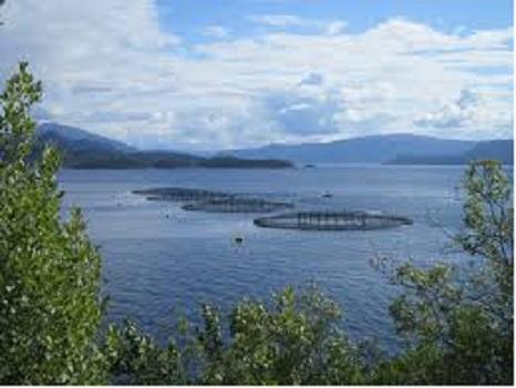 5 Major Aquaculture Market