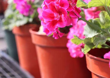 Gardening Pots Market 2019 Growth Factors - Biodegradable Pots,