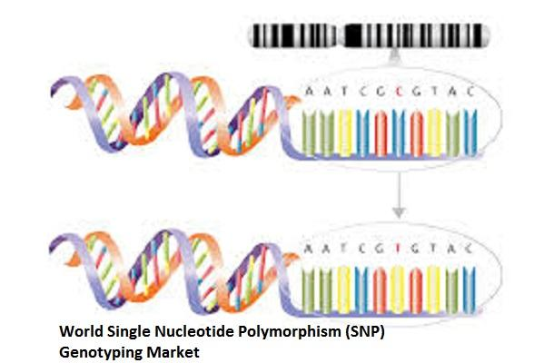 Single Nucleotide Polymorphism (SNP) Genotyping Market