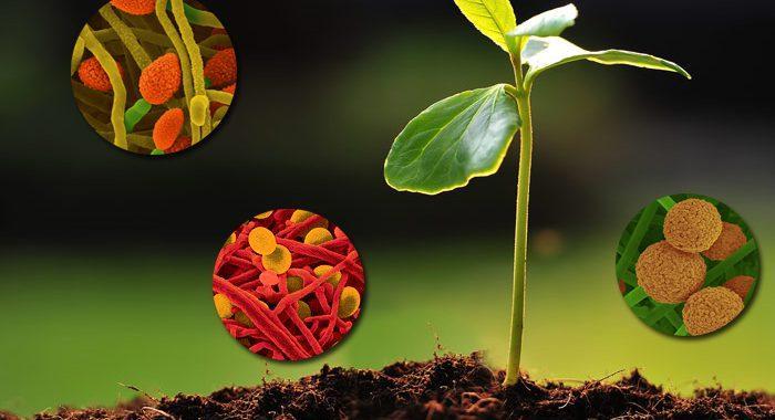 Biostimulant Market Intelligence Report for Comprehensive