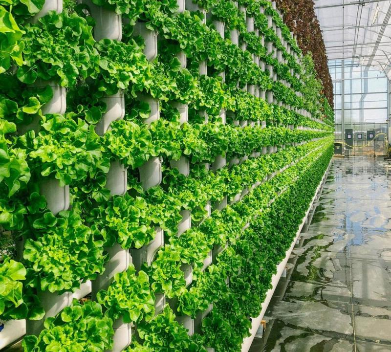 Vertical Farming, Vertical Farming Market, Vertical Farming Market Analysis