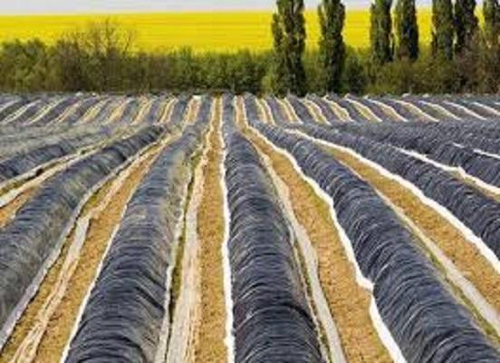 Global Agricultural Films & Bonding Market   PESTEL analysis,