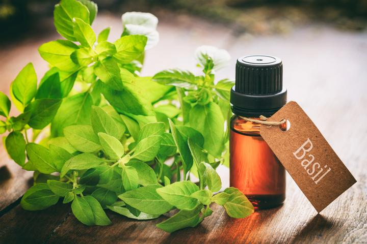 Basil Extracts Market