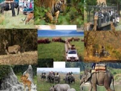 Wildlife Tourism Market